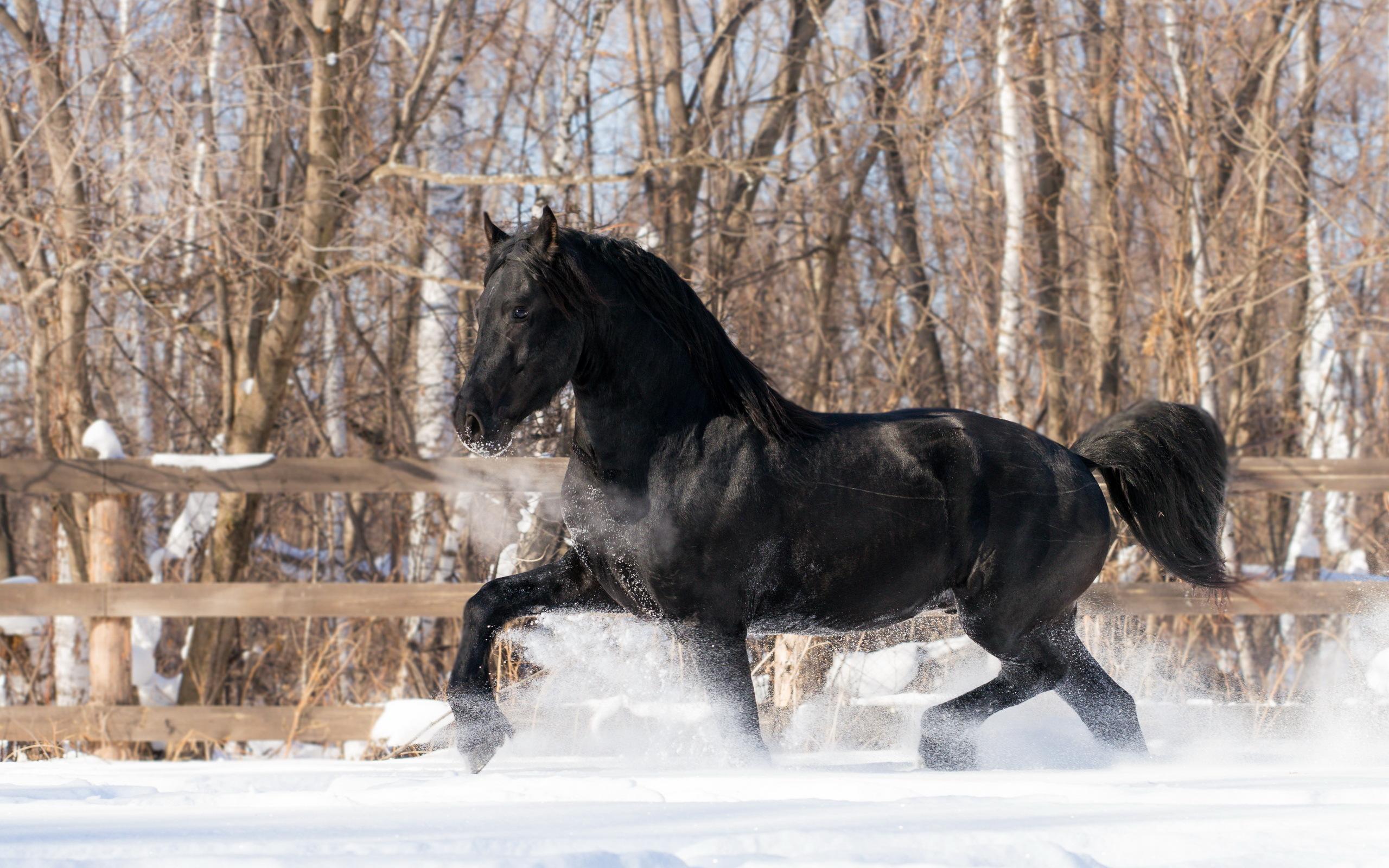 обои для рабочего стола зимние лошади № 465221 без смс