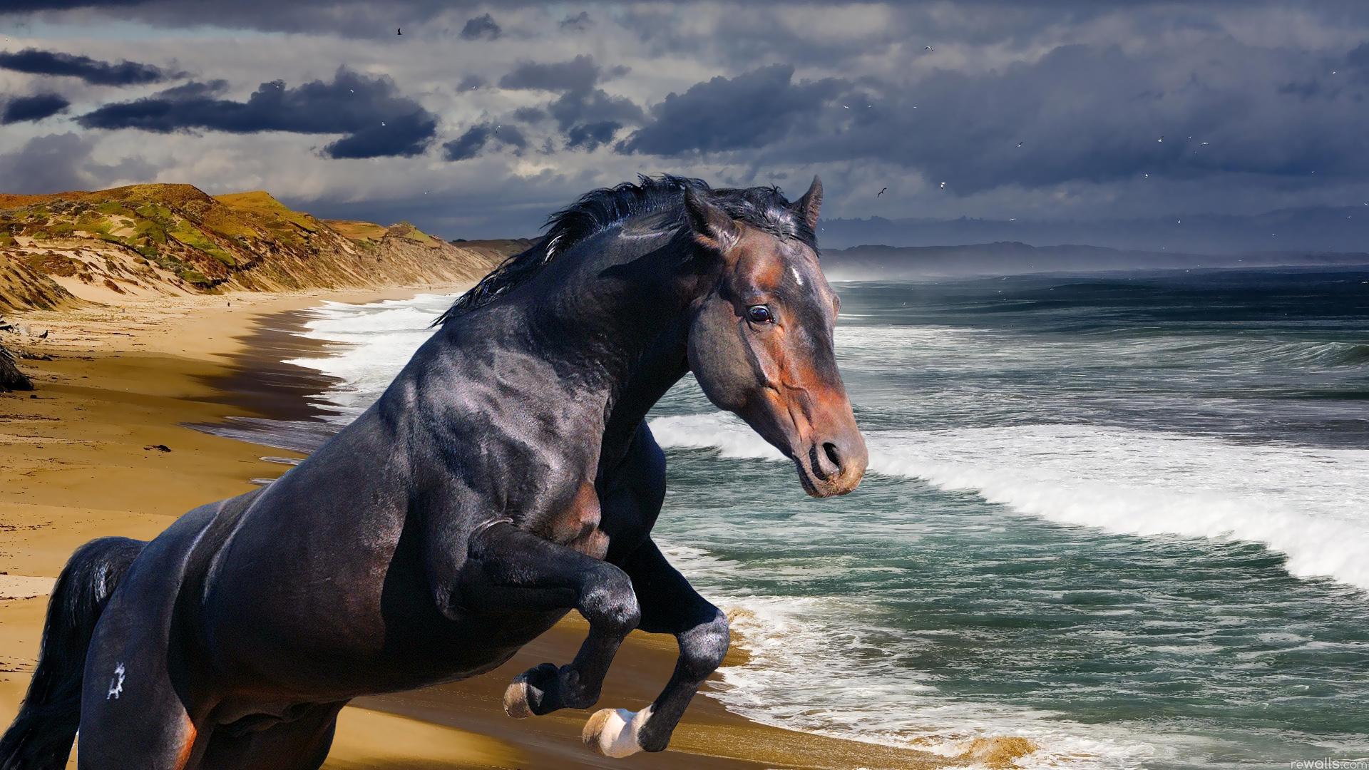 обои для рабочего стола лошади 1366x768 № 447557 бесплатно