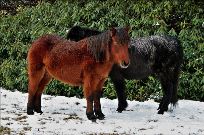 Лошади черные (80 обоев)