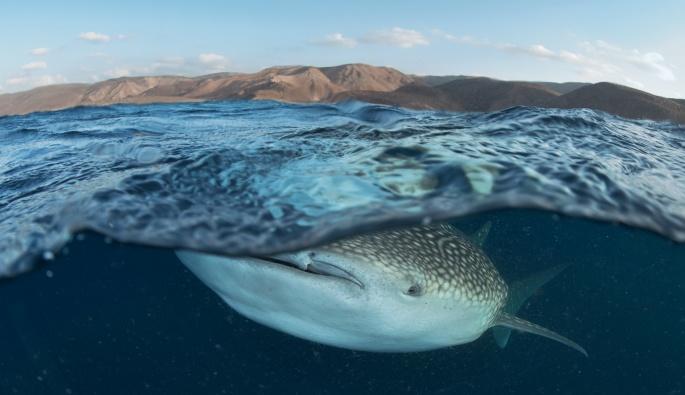 Касатки и киты (80 обоев)