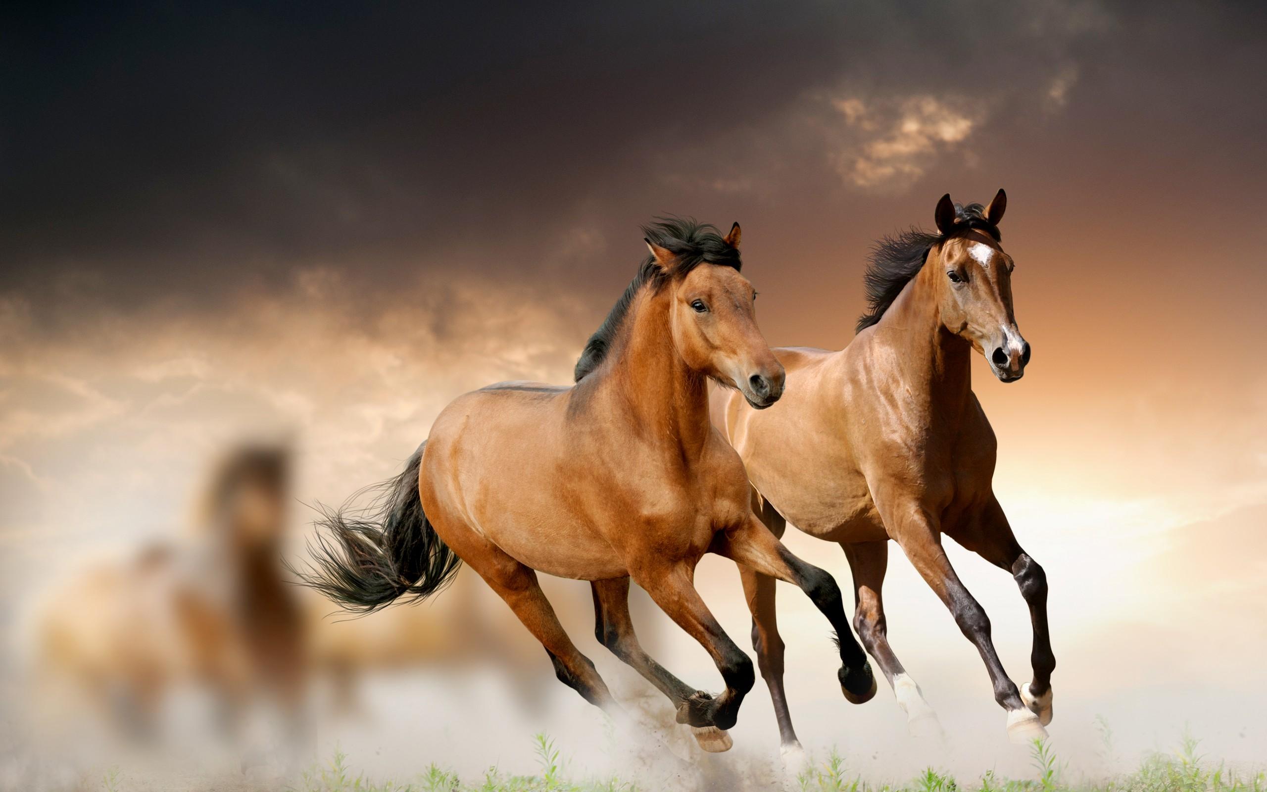 лошади обои на рабочий стол 1280х1024 № 489495 загрузить