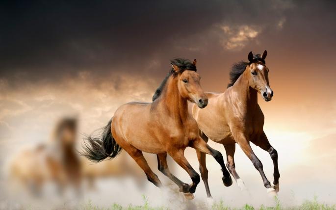 Лошади коричневые (50 обоев)