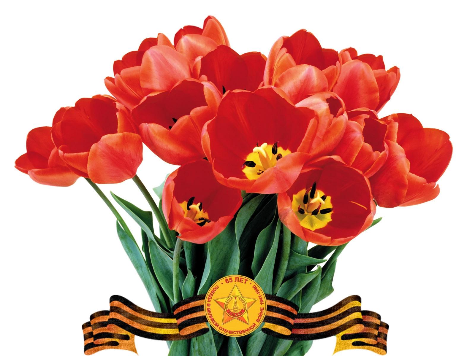 Тюльпаны на день победы открытки фото