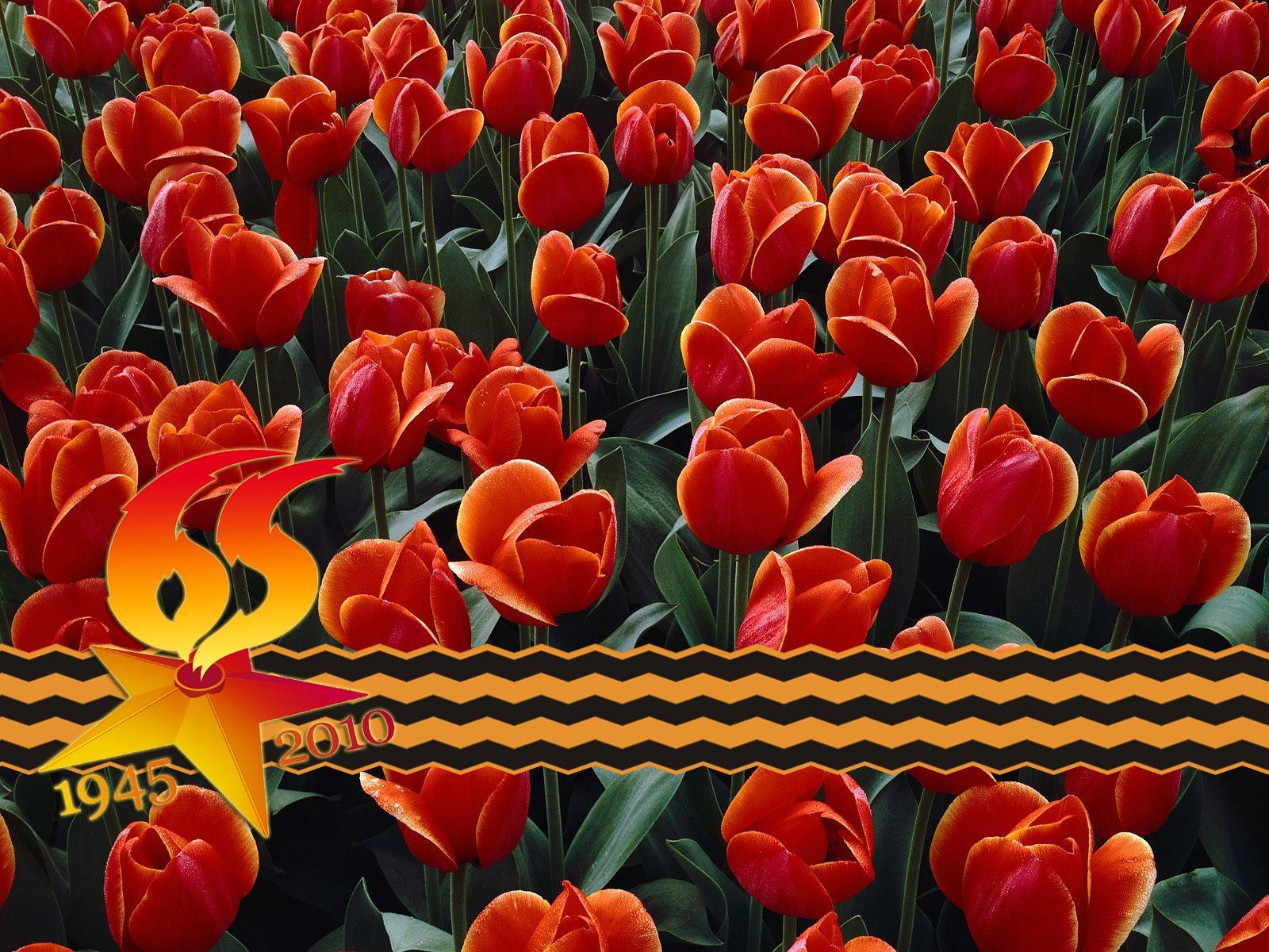 после трех тюльпаны на день победы открытки фото горах