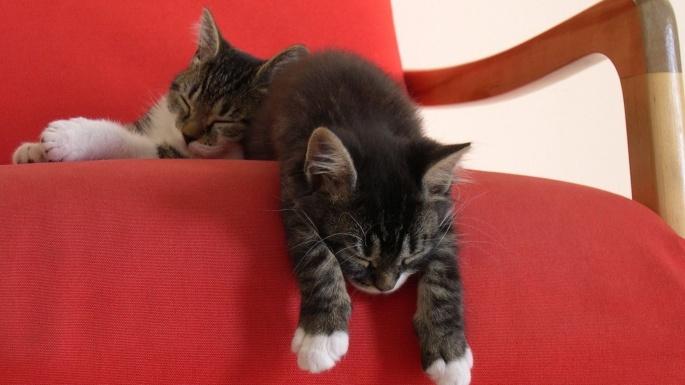Кошки (60 обоев)