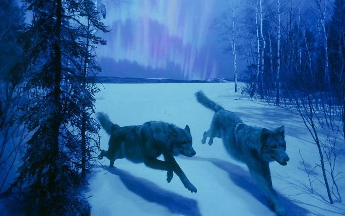 Волки рисованные 2 (60 обоев)