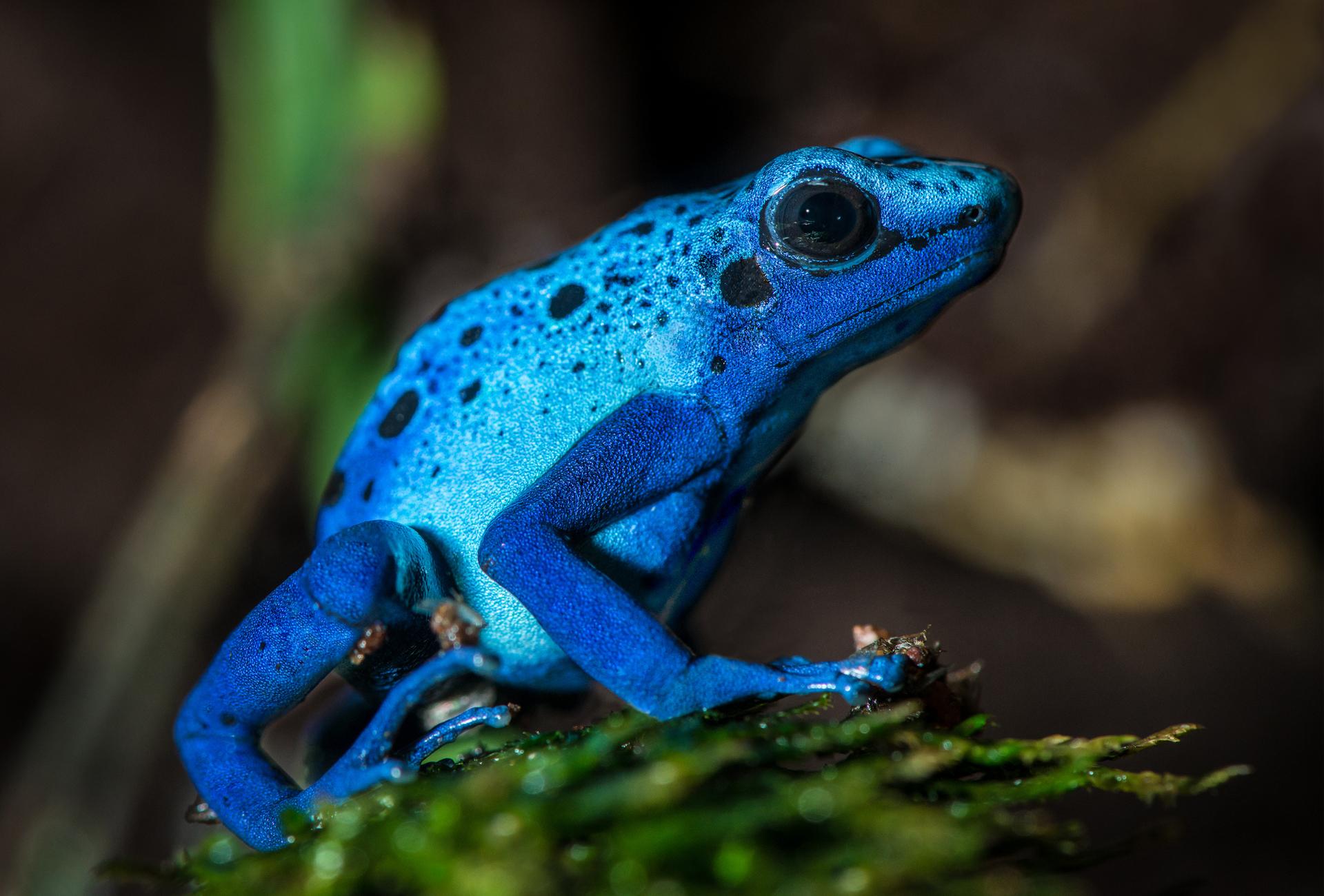 двухстворчатые картинки голубых лягушек прочем