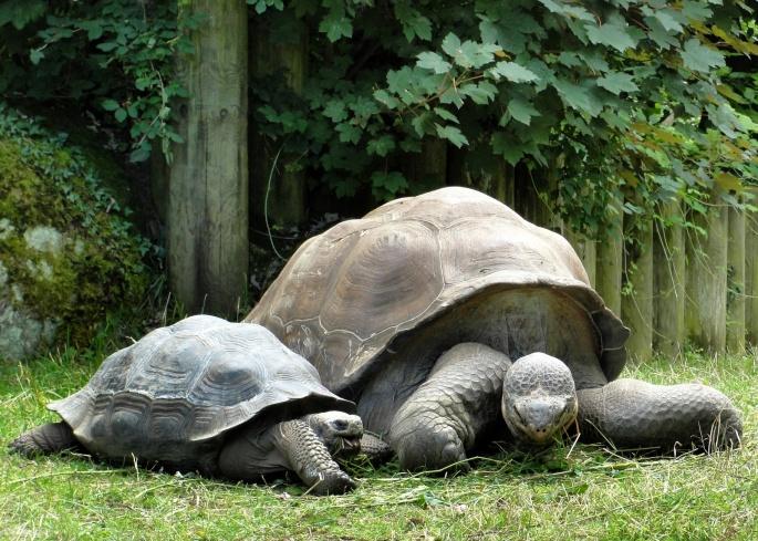Черепахи 5 (81 обоев)