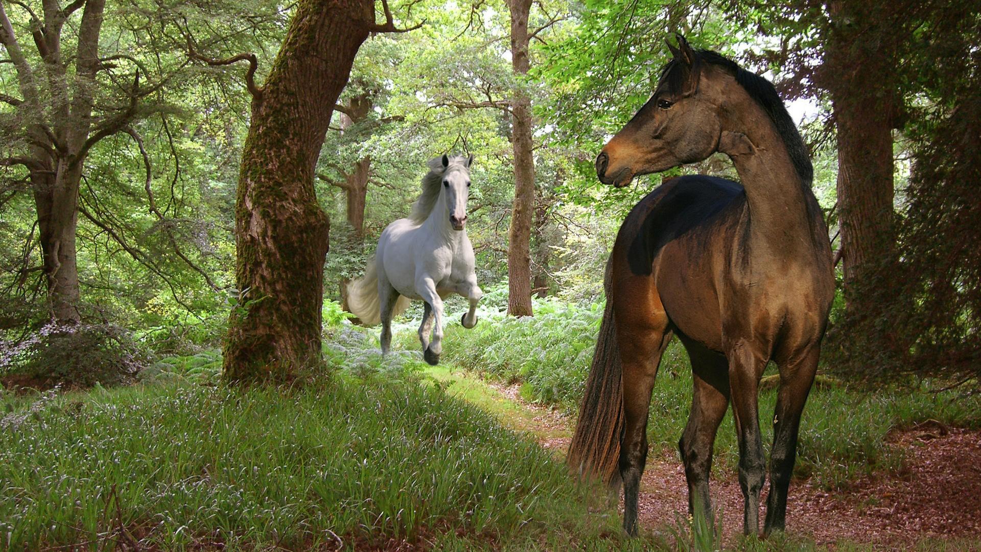 3д лошади обои для рабочего стола № 564015  скачать