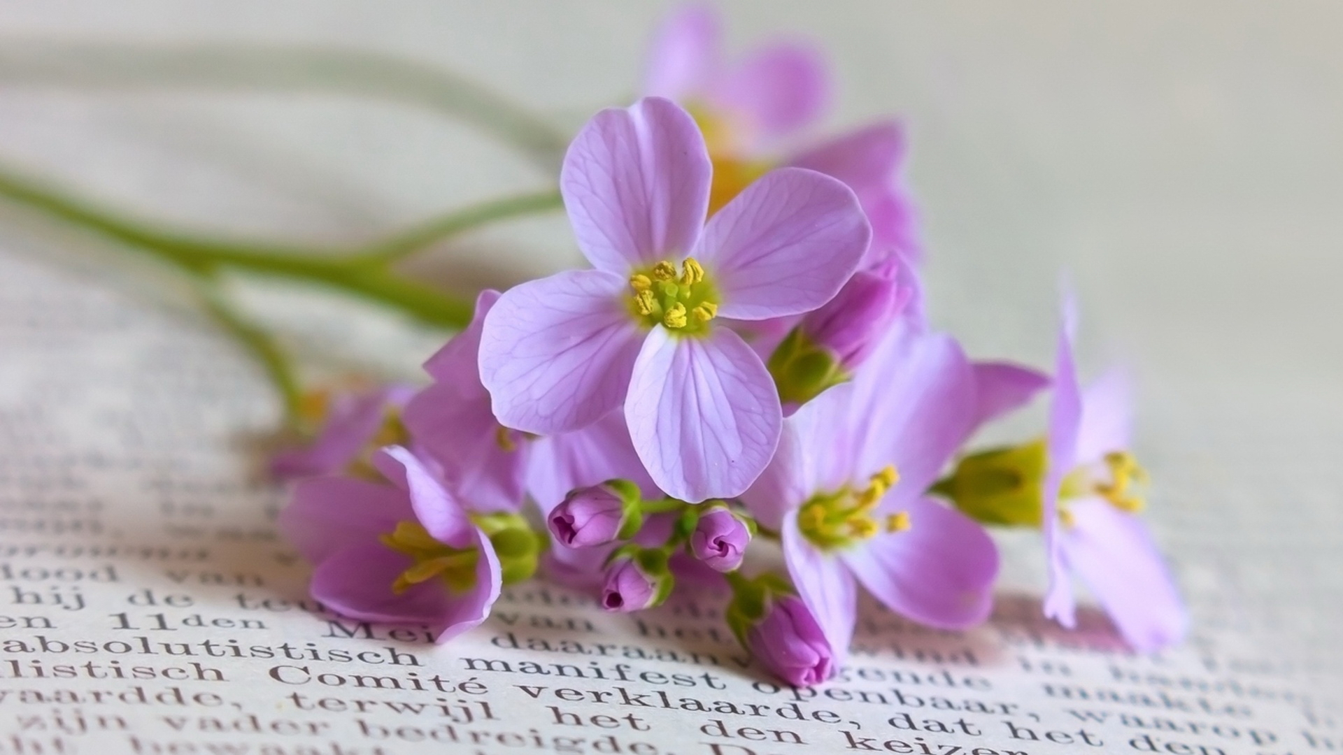 Нежный фиолетовый цветок