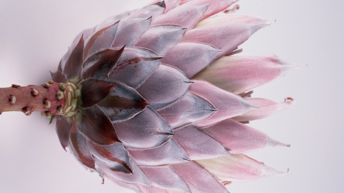 Цветы. Сиреневый этюд (30 обоев)