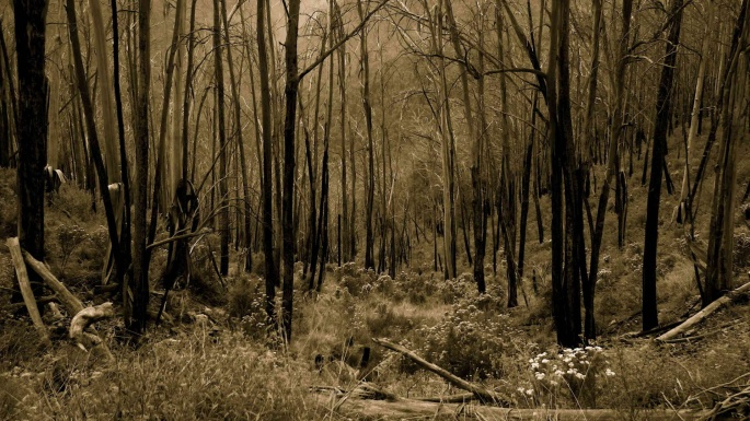 Дивный лес (100 обоев)