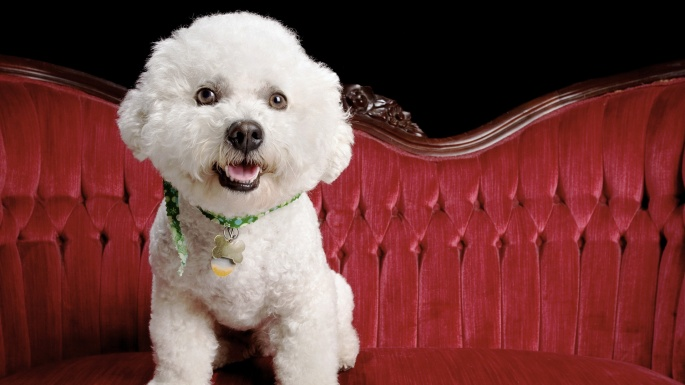 50 чудесных фотообоев с собаками (50 обоев)