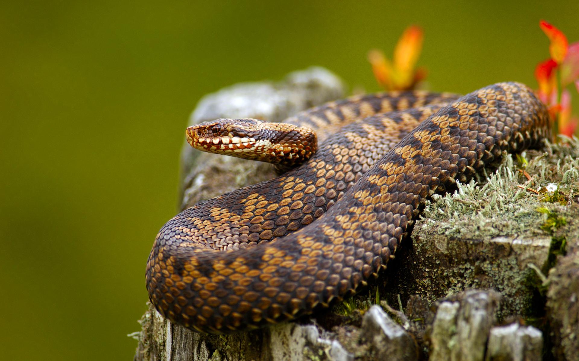 отруйні змії україни фото что финны