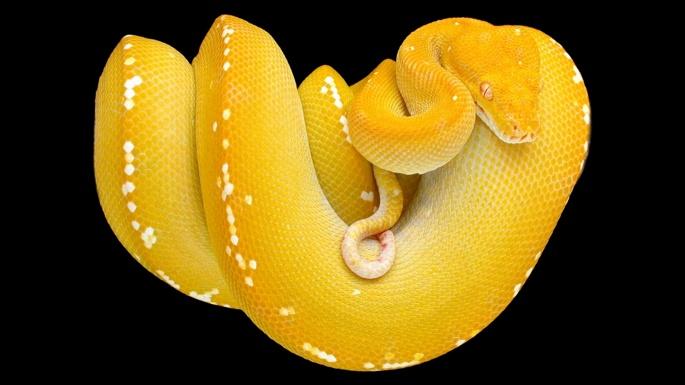 Змеи 2 (61 обоев)