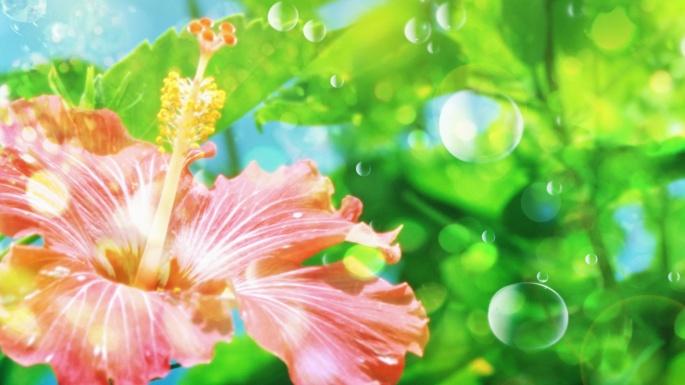 Цветы. Цветочная фантазия (80 обоев)