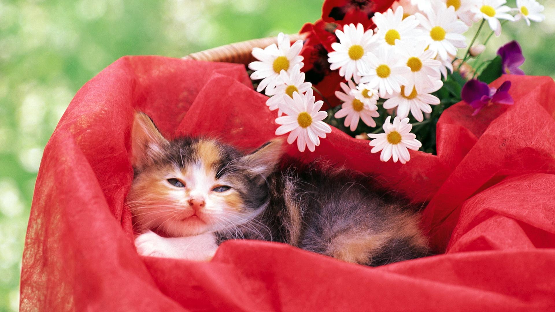 Обои цветы, Кошка. Кошки foto 11