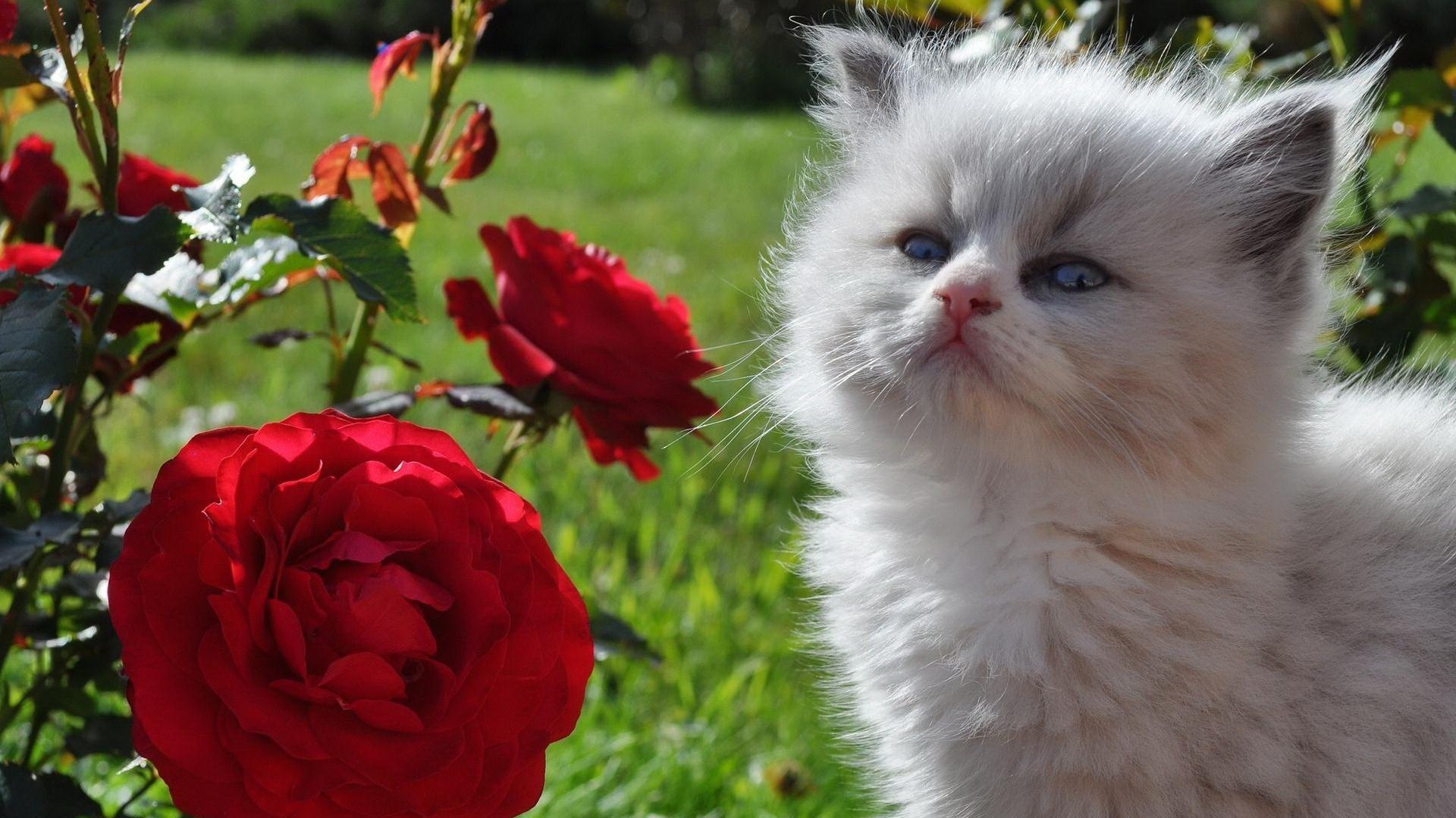 Обои цветы, Кошка. Кошки foto 9