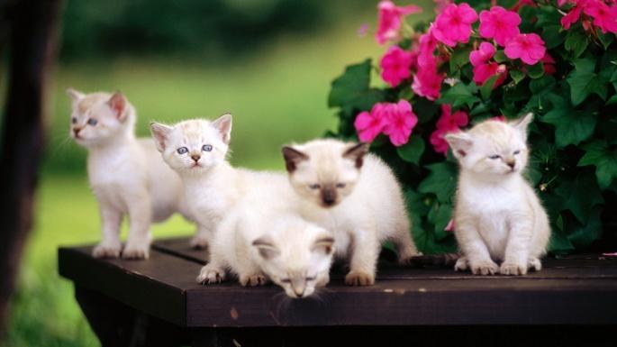 Кошки. Цветы жизни (50 обоев)