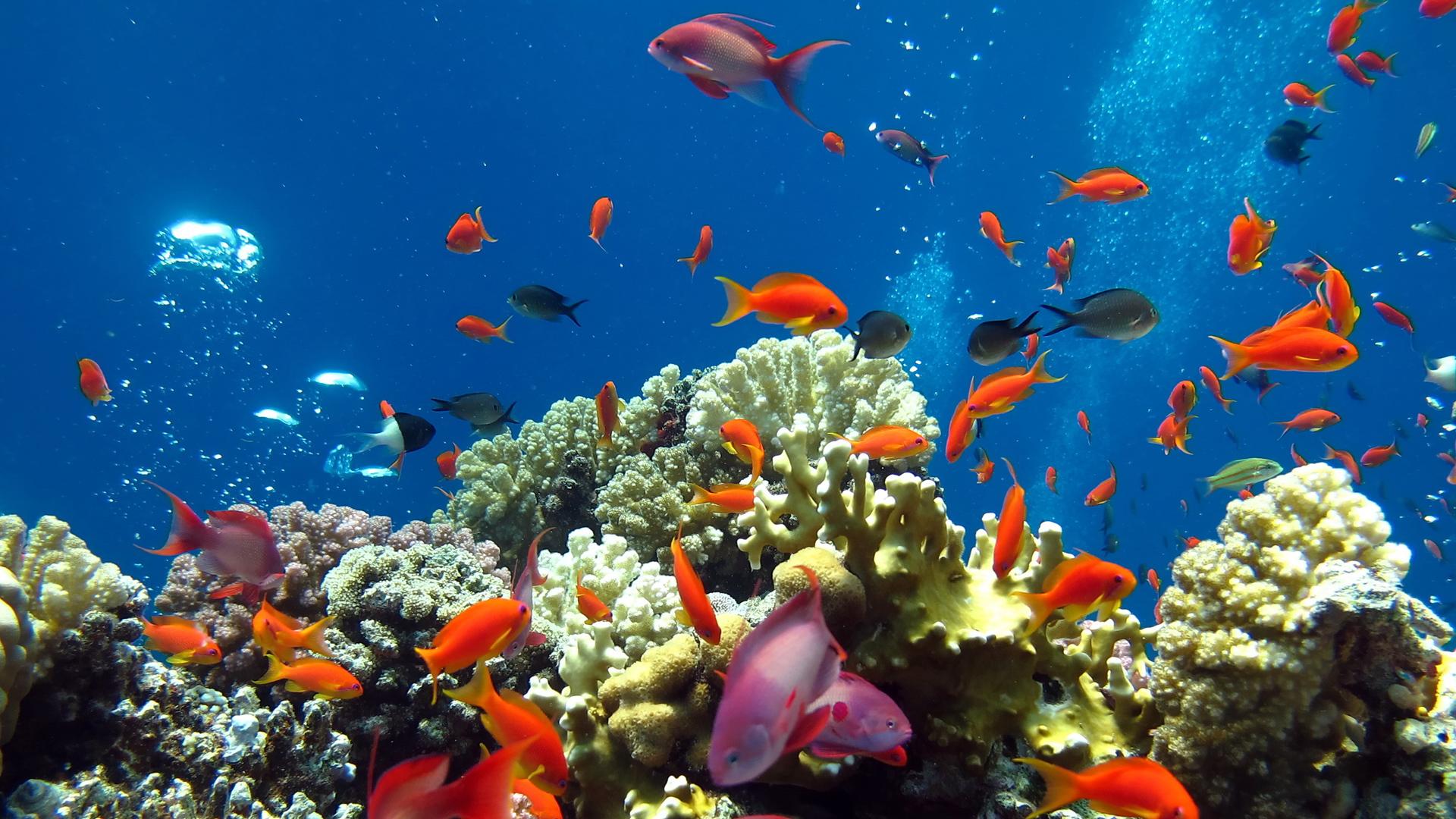 Обои подводный мир 1920x1080 картинки фото HD обои подводный мир ...   1080x1920