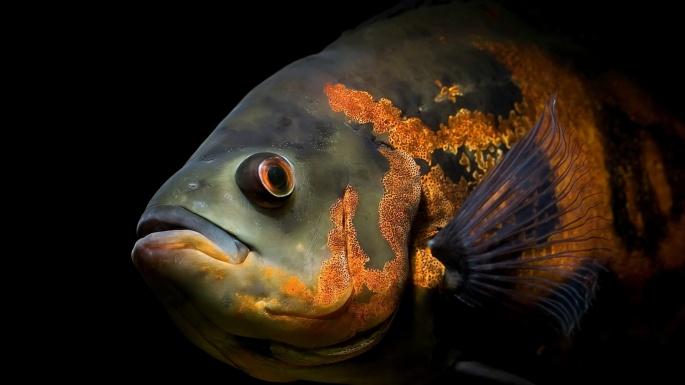 Подводный мир. Самый практичный аквариум в мире (50 обоев)