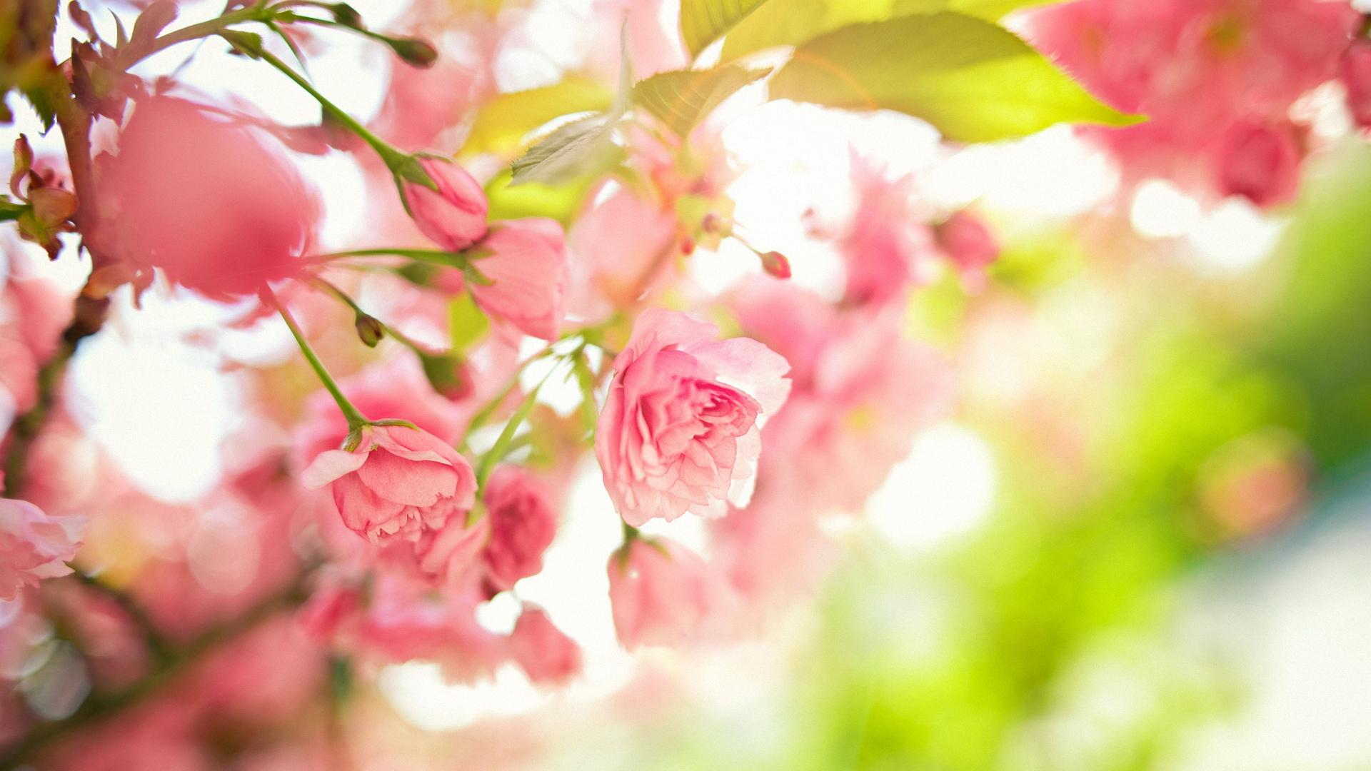 обои на рабочий стол wallpapers цветы № 644857 загрузить