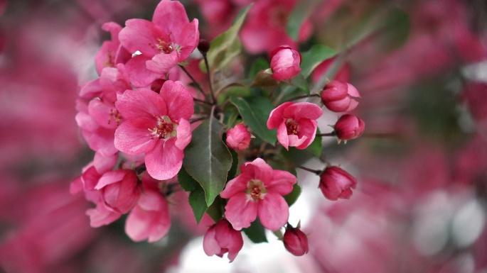 Цветы. Аромат весны (50 обоев)