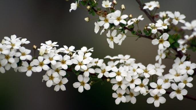 Цветы. Весеннее кружево (50 обоев)