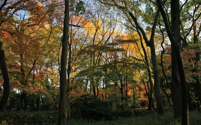 Осень в Киото (43 обоев)