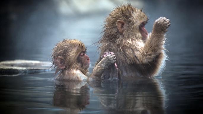 Дикие животные. Планета обезьян (50 обоев)