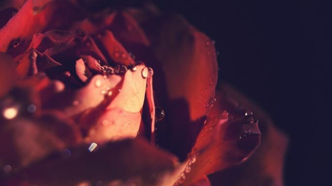 Розы. Розовая душа (50 обоев)