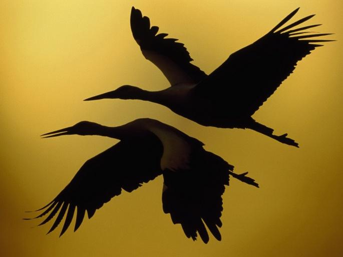 Птицы 2 (100 обоев)