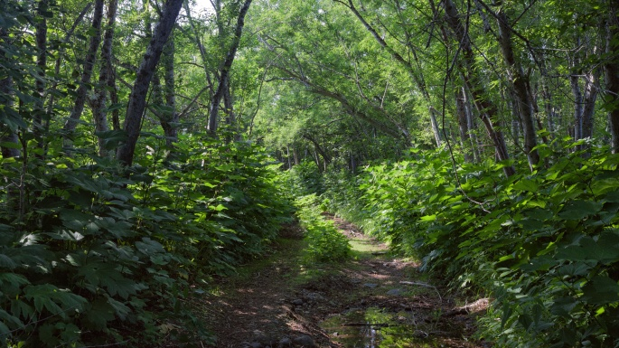 Природа Камчатки (97 обоев)