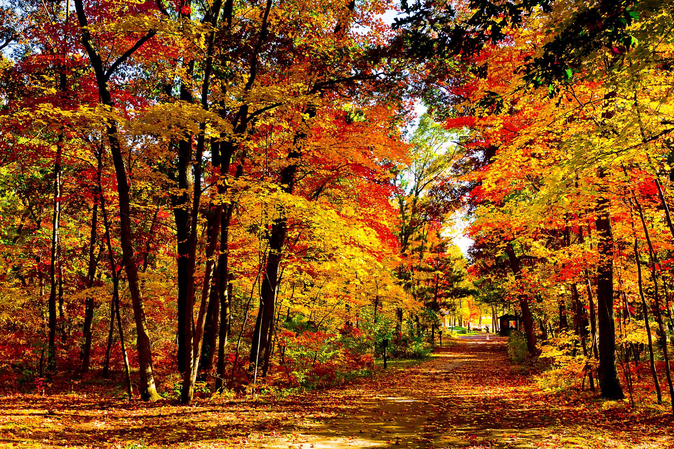 53 for Sfondi autunno hd