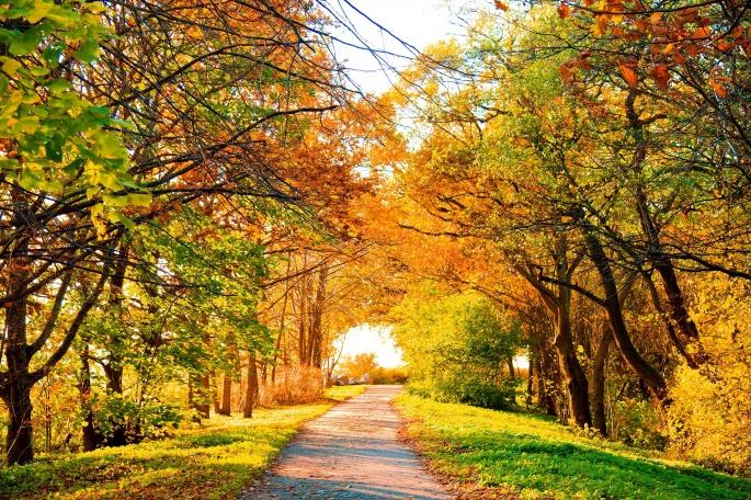 Осенние пейзажи (53 обоев)