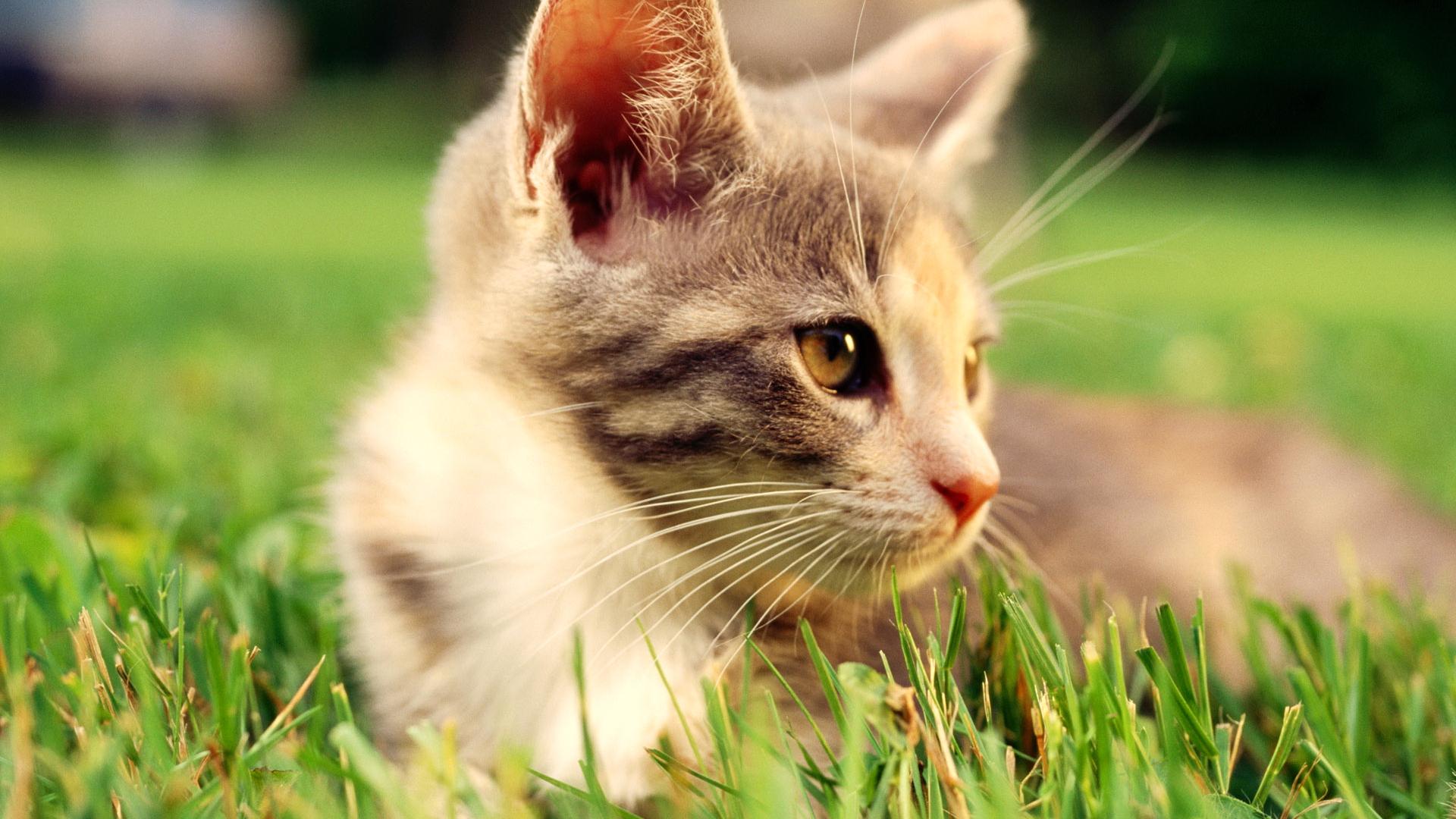 Кошки обои и картинки на рабочий уюта