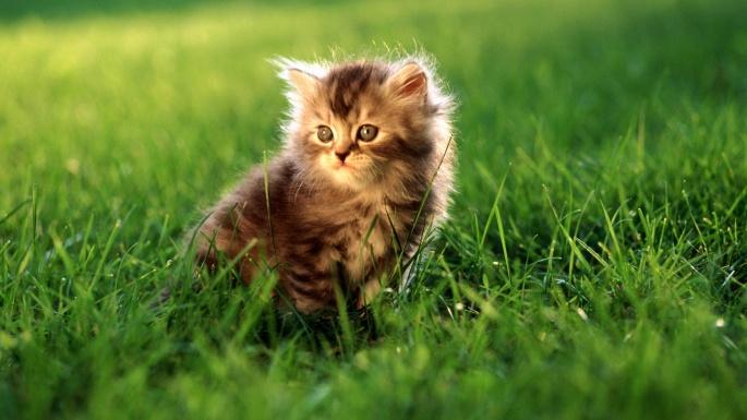 Кошки. Солнечные котята (70 обоев)