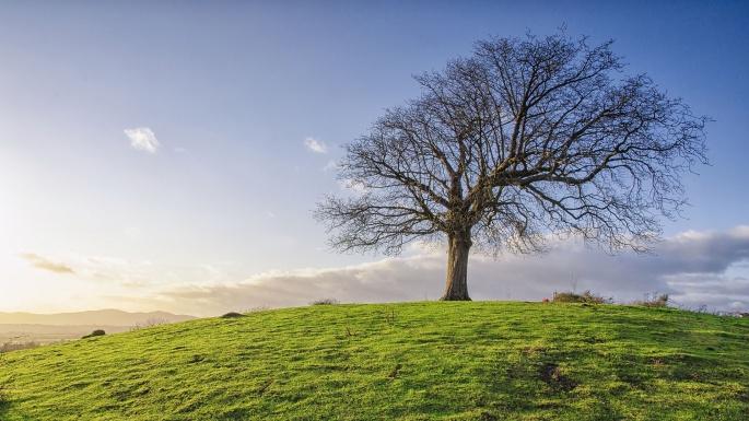 Здравствуй, Дерево (50 обоев)