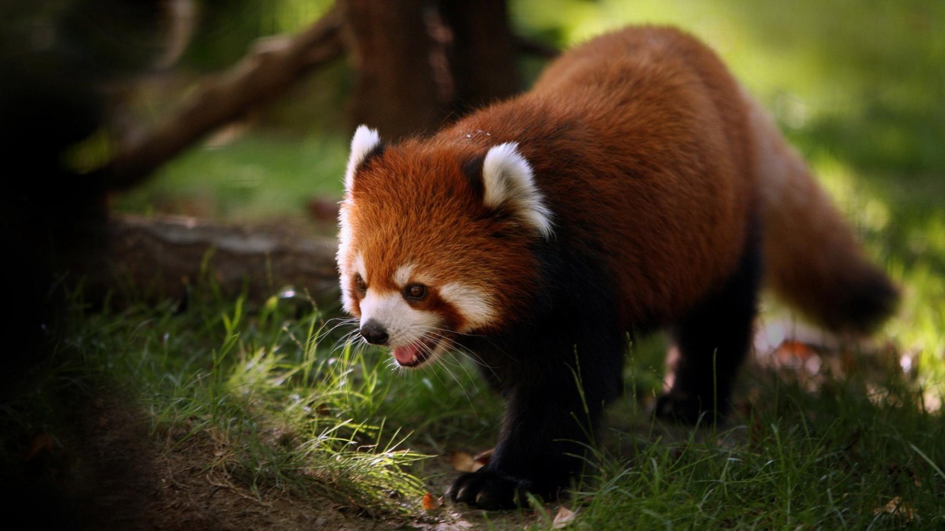 Качественные картинки животные и природа