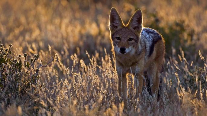 Дикие животные. 50 чудесных фотозарисовок животных в дикой природе (50 обоев)