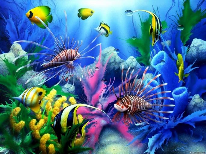 Под водой (113 обоев)