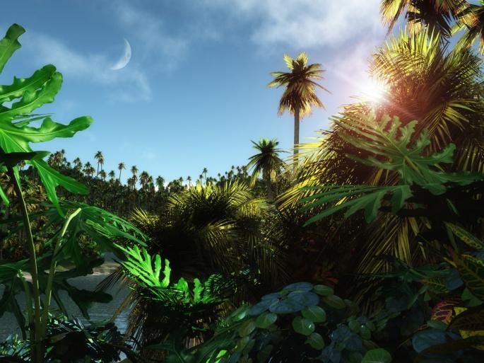 Тропические обои (55 обоев)