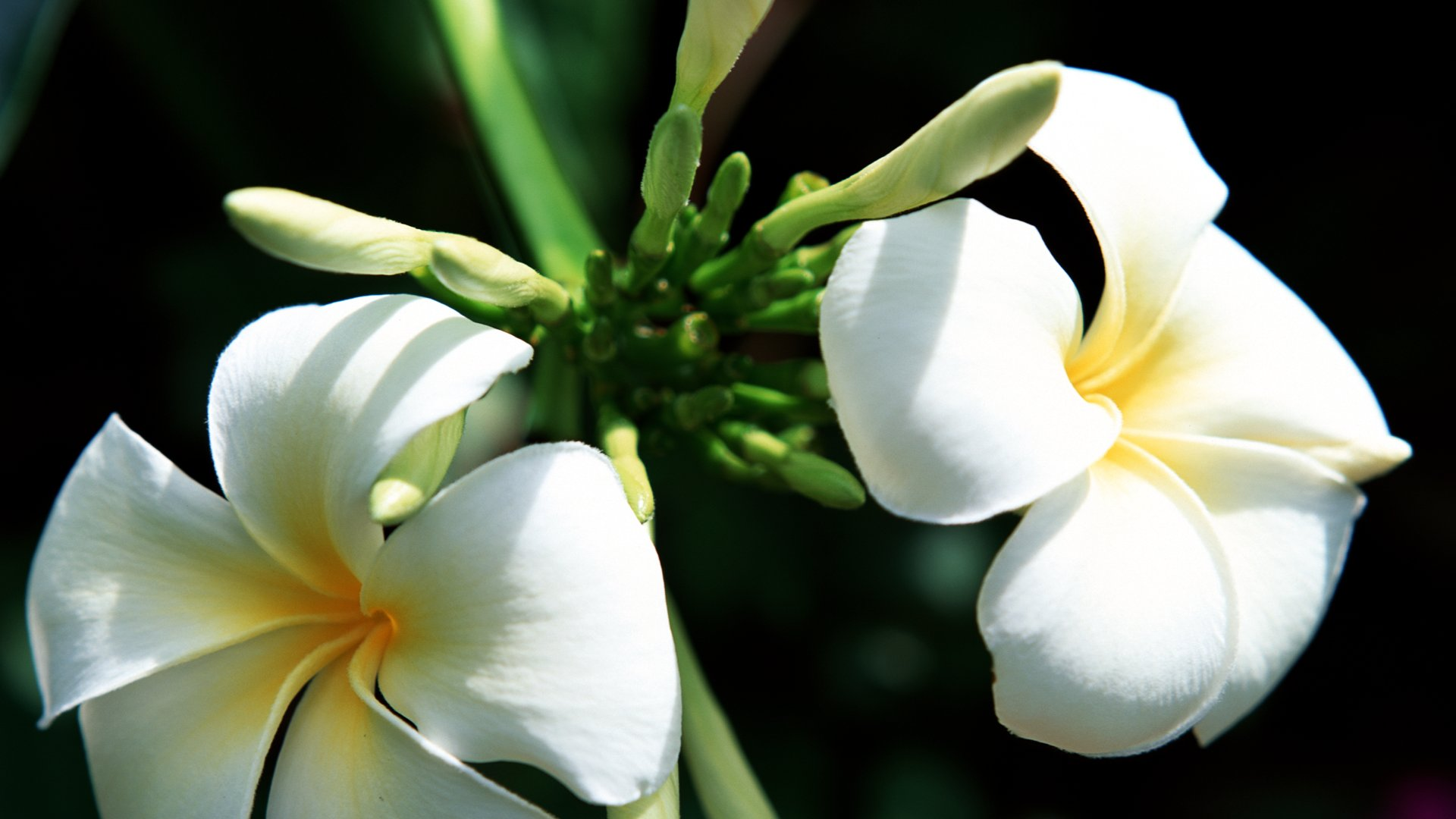 Flowers Images Stock Photos amp Vectors  Shutterstock
