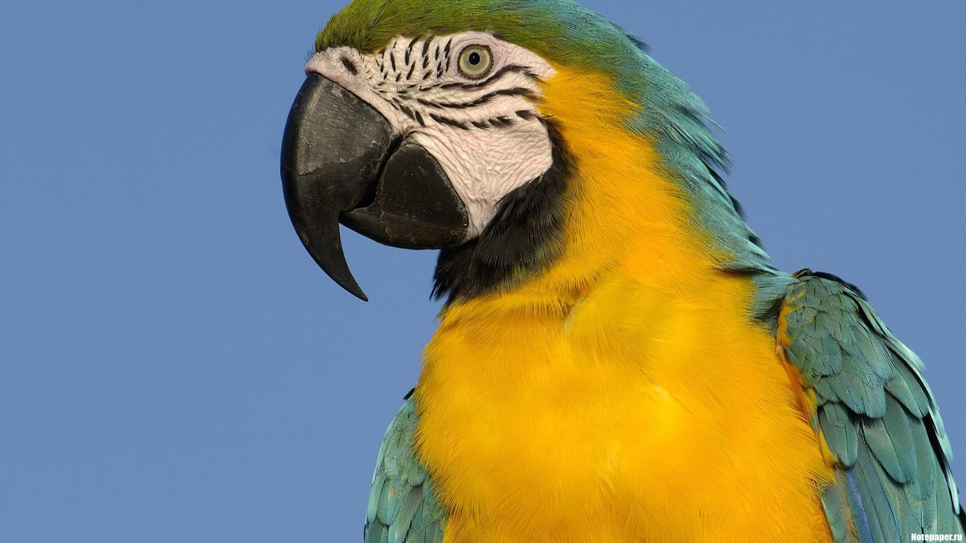 Птица говорун!