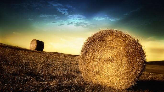Природа. Съесть собаку на сене (100 обоев)