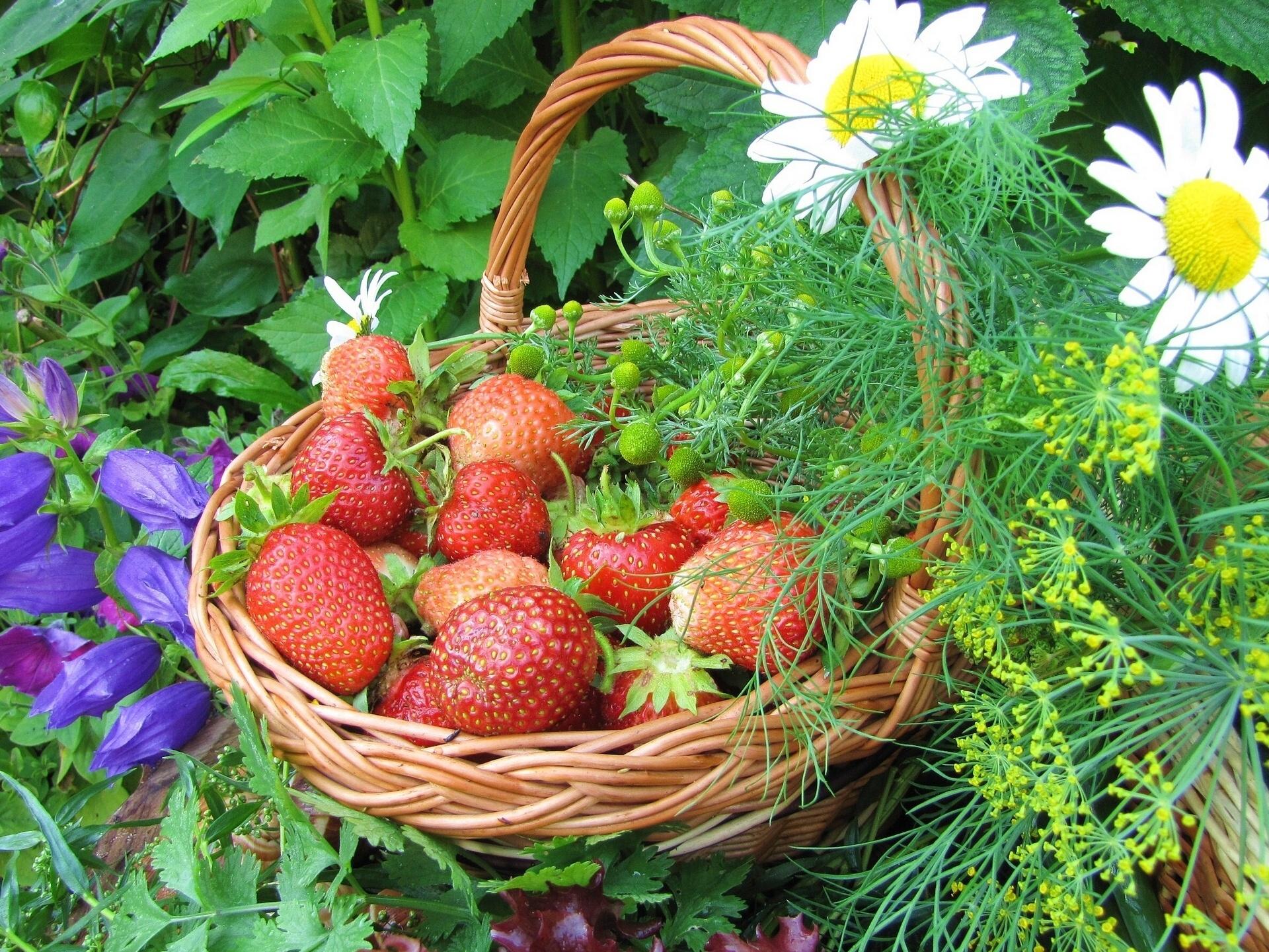 Летние обои для рабочего стола ягоды