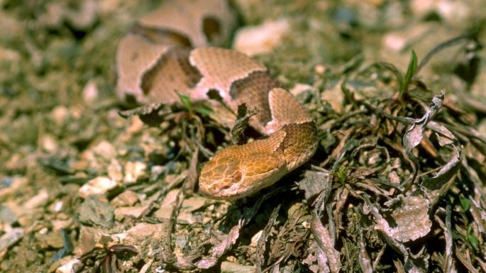 Рептилии. Хладнокровные хищницы (35 обоев)