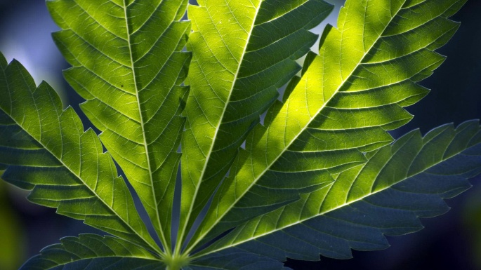 Растения. Травка (30 обоев)