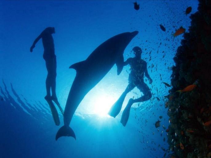 Дельфины (21 обоев)