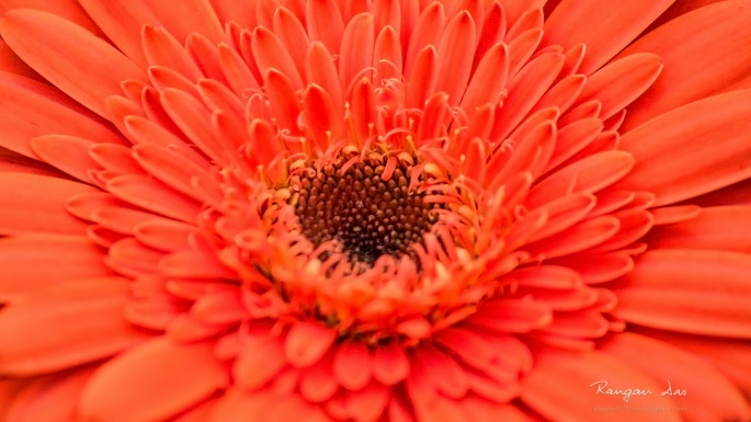Цветы. Детали совершенства (50 обоев)